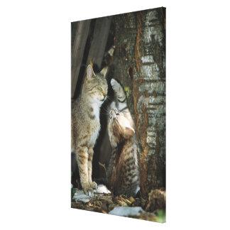 Kat en Katje door Boom Canvas Afdrukken
