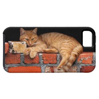 Kat op Bakstenen muur Tough iPhone 5 Hoesje