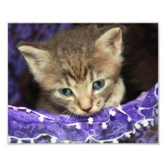 Katje in een Pasen mand Fotoafdruk
