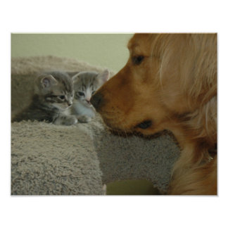 Katjes en een Golden retriever Poster