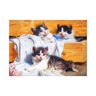 Katjes in een Lade Uitgerekte Druk van het Canvas