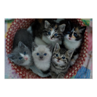 Katjes in een Mand Poster