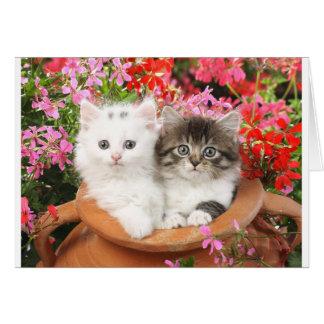 Katjes in een pot kaart