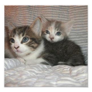 Katjes op een Deken Fotografische Afdruk