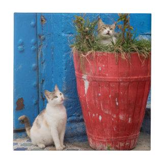 Katten die, Rabat, Marokko rond spelen Keramisch Tegeltje