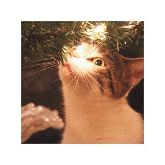 Katten en lichten - de kat van Kerstmis - Canvas Afdruk
