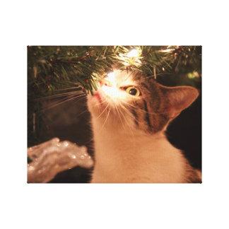 Katten en lichten - de kat van Kerstmis - Canvas Afdrukken