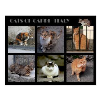 Katten van Capri - Italië Briefkaart