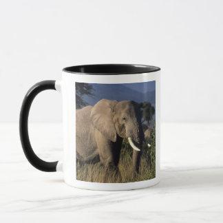Kenia: Amboseli, mannelijke Afrikaanse olifant Mok