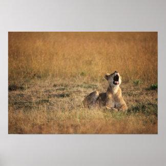 Kenia, de Nationale Reserve van Masai Mara, Poster