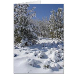 Kerstkaart van de Schoonheid van Colorado de Bos Wenskaart