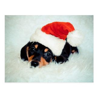 Kerstmis van het Puppy van de tekkel Briefkaart