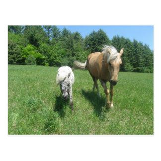 Khrysta, het paard van Morgan, en Contant geld, Briefkaart