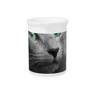 Kijkt het Russische Blauw van de kat het Grijze Pitcher