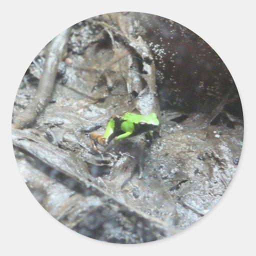 kikker, de kikker van het vergiftpijltje ronde sticker