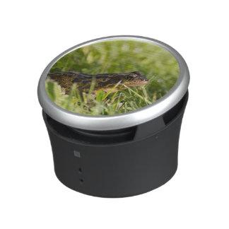 Kikker Speaker