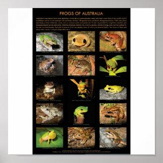 Kikkers van het Poster van Australië