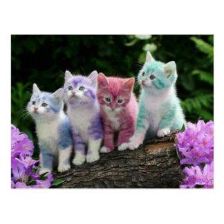 kittens met kleur briefkaart