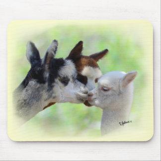 Klantgerichte Drie Alpacas Mousepad Muismat