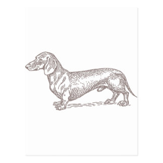 Klassieke Doxie - Grijs Briefkaart