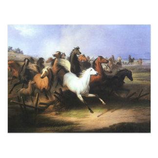 Klassieke het Lopen van de Kunst Paarden Briefkaart
