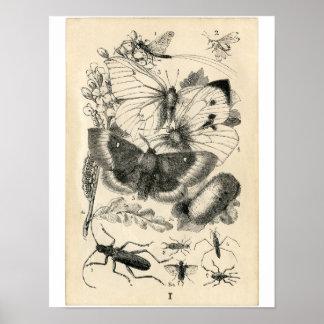 Klassieke Zoölogische Ets - Insecten Poster