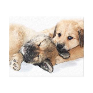 klein Puppy Canvas Afdruk