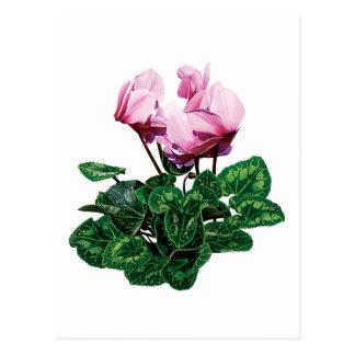 Kleine Roze Cyclaam Briefkaart
