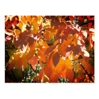 Kleur de witte van de as (americana Fraxinus) Briefkaart