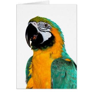 kleurrijk gouden blauwgroen de vogelportret van de kaart