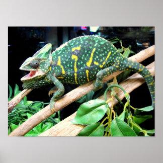 Kleurrijk Kameleon Poster