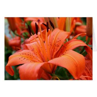 [Kleurrijke Bloemen] de Lelie van de Tijger - Om Briefkaarten 0
