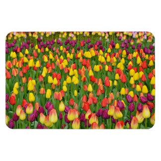 Kleurrijke de drukmagneet van de lentetulpen magneet