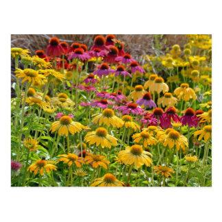 Kleurrijke echinaceabloemen in bloei briefkaart
