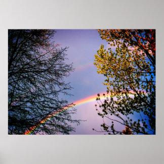 Kleurrijke Rainbow&Trees Poster