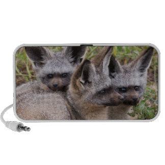 Knuppel-Eared Vossen Nationaal Park Serengeti Laptop Speaker