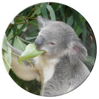 Koala die het Blad van de Gom eten Porseleinen Bord