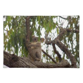 KOALA IN BOOM LANDELIJK QUEENSLAND AUSTRALIË PLACEMAT