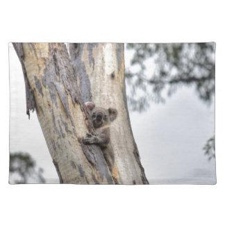 KOALA IN BOOM QUEENSLAND AUSTRALIË PLACEMAT
