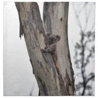 KOALA IN BOOM QUEENSLAND AUSTRALIË SERVET