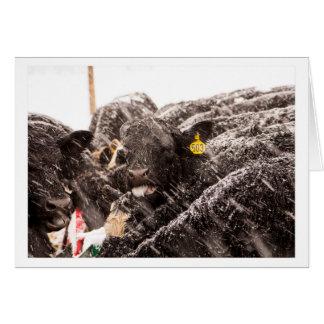 Koe die Sneeuwvlokken op de Kaart van de Vakantie