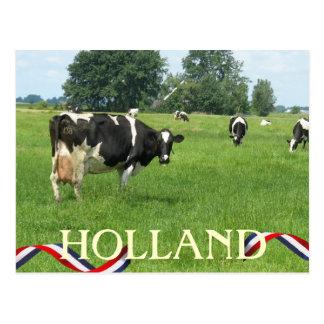 Koe die u bekijken het Briefkaart van de Koeien