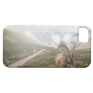 Koe in de vallei - iPhone 5 hoesje