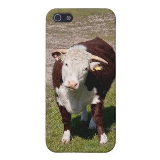 Koe iPhone 5 Covers