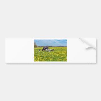 Koe met kalveren die in weide met paardebloemen bumpersticker