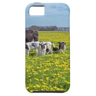 Koe met kalveren die in weide met paardebloemen tough iPhone 5 hoesje