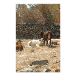 Koeien Briefpapier