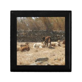 Koeien Decoratiedoosje
