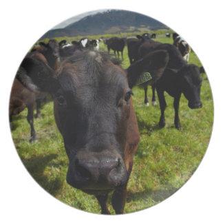 Koeien en MT Somers Melamine+bord