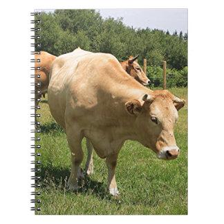 Koeien op gebied, Gr Camino, Spanje 2 Ringband Notitieboek
